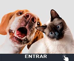 Artículos para Mascotas Baratos Personalizados