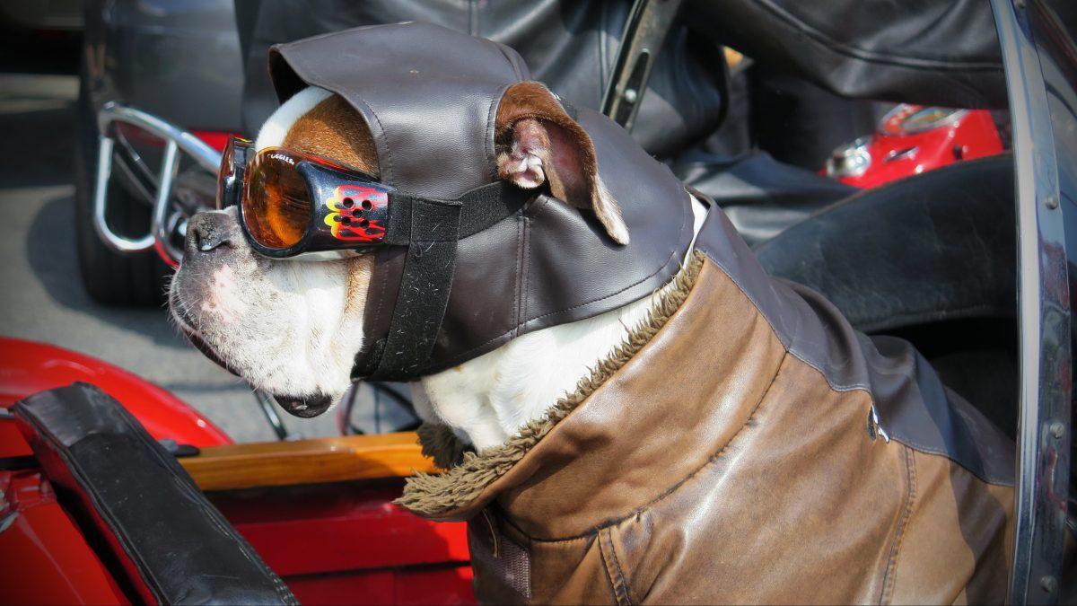 Accesorios que tu mascota necesita en verano