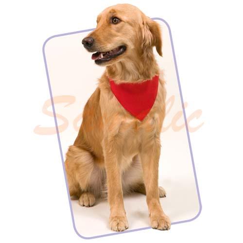 Collar bandana para perro